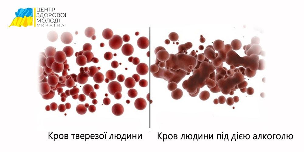 Скільки тримається алкоголь у крові? - image 14 1